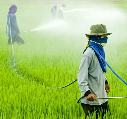 Need For Progressive Transition  From Chemical-Based To Organic Agriculture