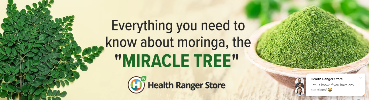 """Everything you need to know about moringa, the """"Miracle Tree"""""""